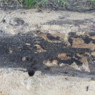Residential Exterminator Bug Master Pest Control